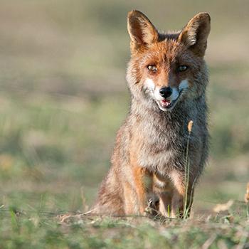 Non aux Ch'tis Fox Days !