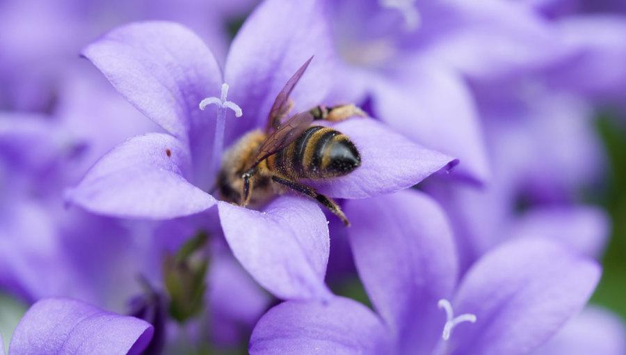 les pesticides tueurs d'abeilles interdits