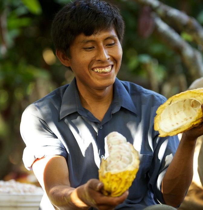 Employé dans la plantation de cacao équitable Forestera au Perou
